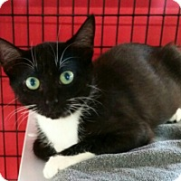 Adopt A Pet :: Tabatha - New Smyrna Beach, FL
