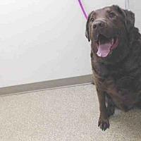 Adopt A Pet :: RASCAL - Palmer, AK