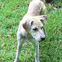 Adopt A Pet :: Arabella - New Canaan, CT