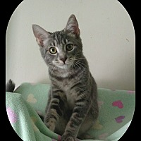 Adopt A Pet :: Mynxie - Richmond, VA