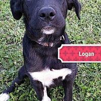 Adopt A Pet :: Logan - Clear Lake, IA