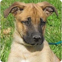 Adopt A Pet :: Augi - Providence, RI