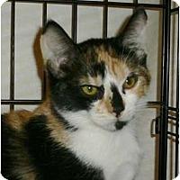 Adopt A Pet :: Sienna - lake elsinore, CA