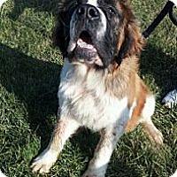 Adopt A Pet :: MORTIMER - Sudbury, MA