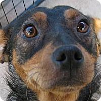 Adopt A Pet :: Tawny - Oakley, CA
