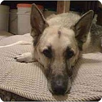 Adopt A Pet :: Max - Green Cove Springs, FL