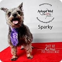 Adopt A Pet :: Miss Sparky - Shawnee Mission, KS