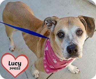 Boxer/American Bulldog Mix Dog for adoption in San Antonio, Texas - A344552 Lucy