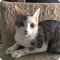 Adopt A Pet :: Christie - Colmar, PA