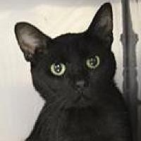 Adopt A Pet :: Parker - Columbia, SC