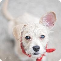 Adopt A Pet :: Winnie - Kingwood, TX