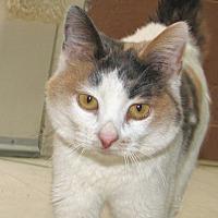 Adopt A Pet :: Fidget - Ruidoso, NM