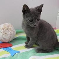 Adopt A Pet :: Stormy - Thibodaux, LA