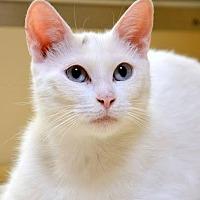 Adopt A Pet :: Maple - Hamilton, ON