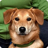 Adopt A Pet :: Chip - PENDING, in Maine - kennebunkport, ME