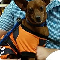 Adopt A Pet :: Patrick - Phoenix, AZ