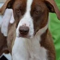 Adopt A Pet :: Felicia - Jackson, MS
