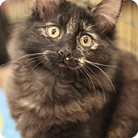 Adopt A Pet :: Mikasa - Sacramento, CA