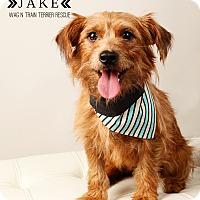 Adopt A Pet :: Jake - Omaha, NE