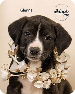 Labrador Retriever Mix Puppy for adoption in Cincinnati, Ohio - Glenna