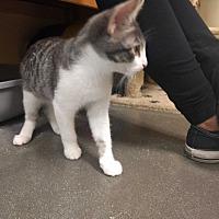 Adopt A Pet :: Bonnie - La puente, CA