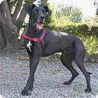 Adopt A Pet :: Goose - Santa Barbara, CA