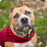 Adopt A Pet :: Diego - Reisterstown, MD