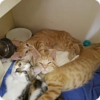 Adopt A Pet :: Slater - Elyria, OH