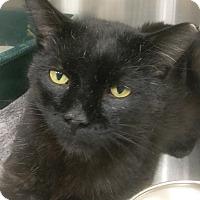 Adopt A Pet :: Jimmy - Webster, MA