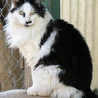 Adopt A Pet :: Salty - Chico, CA