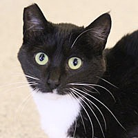 Adopt A Pet :: Veronica - Pacific Grove, CA