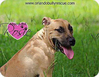 Black Mouth Cur/Rhodesian Ridgeback Mix Dog for adoption in Orlando, Florida - Rosie