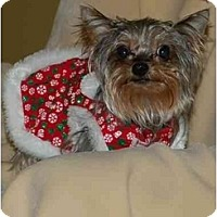 Adopt A Pet :: Roriee - Charlotte, NC