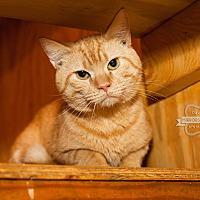 Adopt A Pet :: Scout $25 adoption special - Monterey, VA