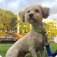 Adopt A Pet :: Sally - Mission Viejo, CA