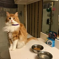 Adopt A Pet :: Chester Courtesy Post - Absecon, NJ