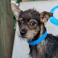 Adopt A Pet :: Django - Lakeland, FL