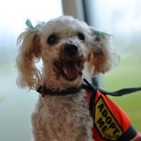 Adopt A Pet :: Susie - New Orleans, LA