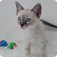 Adopt A Pet :: Skye - Benton, LA