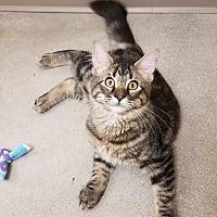 Adopt A Pet :: Jerry - Edmond, OK