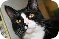 Domestic Shorthair Kitten for adoption in Walker, Michigan - Petey