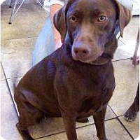 Adopt A Pet :: Jazzie - Altmonte Springs, FL