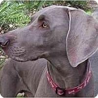 Adopt A Pet :: Marley - Eustis, FL