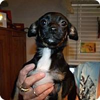 Adopt A Pet :: Juliette - Garden Grove, CA