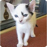 Adopt A Pet :: Uma - Riverside, CA