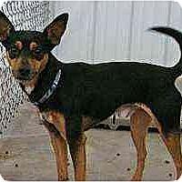 Adopt A Pet :: Turbo - Florissant, MO