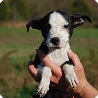 Adopt A Pet :: Mork - Milford, CT
