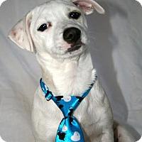 Adopt A Pet :: Jack - Cotati, CA