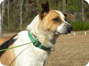 Terrier (Unknown Type, Medium) Mix Dog for adoption in Ocean Springs, Mississippi - Gomez