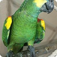 Adopt A Pet :: Luke - Burleson, TX